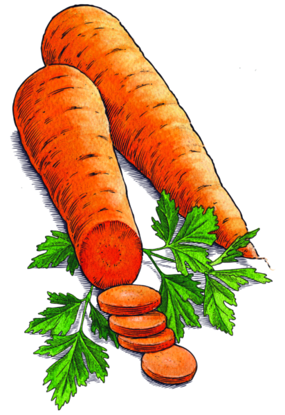 Carrots_Parsley